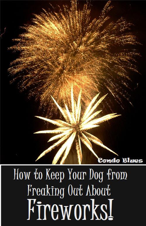 Stop Dog Barking During Fireworks