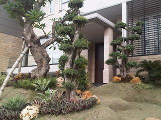 Galeri Taman - Tukang Taman Surabaya 53