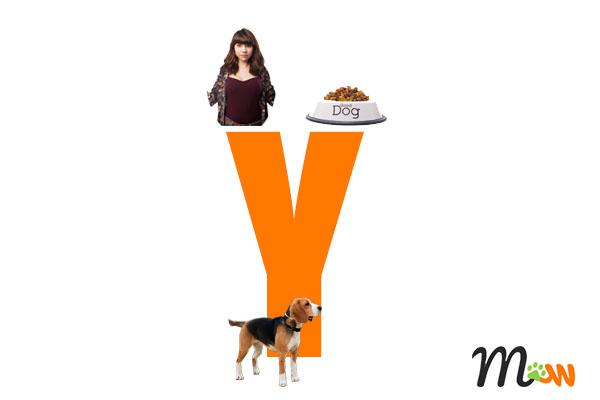 los perros prefieren el cariño a la comida