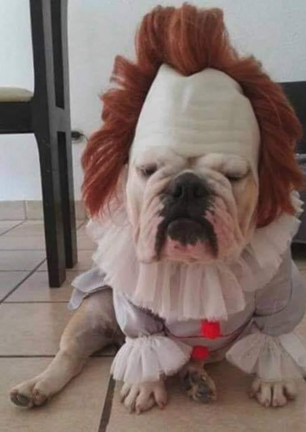 Pennywise-Bull : ハロウィンの恐怖のピエロ犬のペニーワイズブル🎃