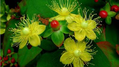 Very Nice Flowers