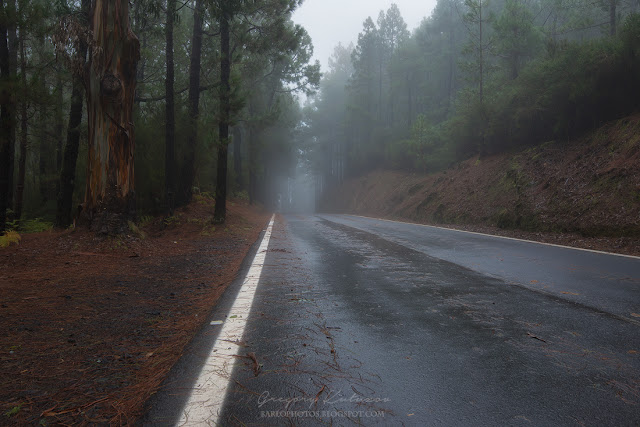 Дорого через лес Эсперанса к вулкану Тейде