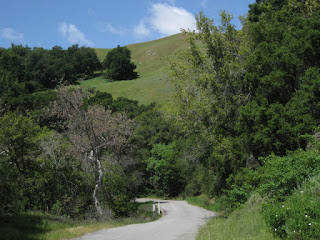 Curvy, one-lane section of Santa Rosa Creek Road near Cambria, California