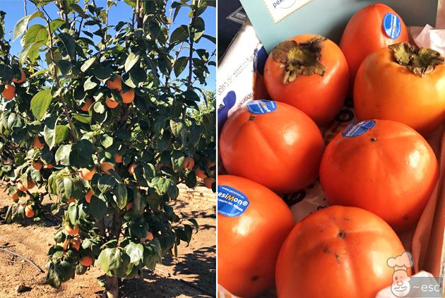 Kakis cultivados en las tierras de la Ribera del Xúquer