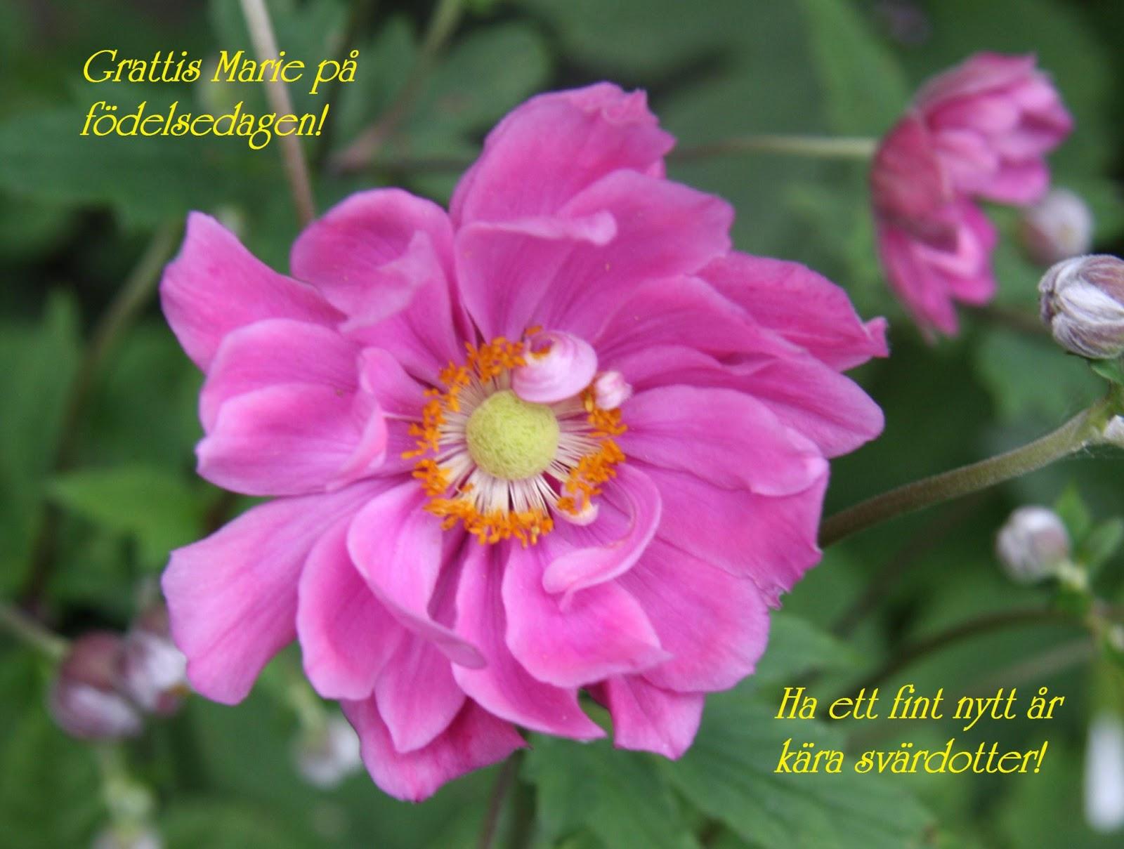 grattis marie Välkommen till Ann Viols Blogg: GRATTIS MARIE PÅ FÖDELSEDAGEN! grattis marie