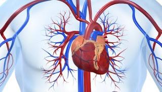 buah alpukat untuk kesehatan jantung, alpukat berfungsi untuk jantung