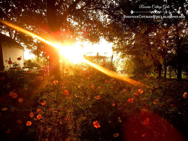 Seek me | photo of a garden and beautiful flowers in the sunrise \ rosevinecottagegirls.com