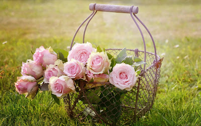 roses in basket widescreen resolution hd wallpaper