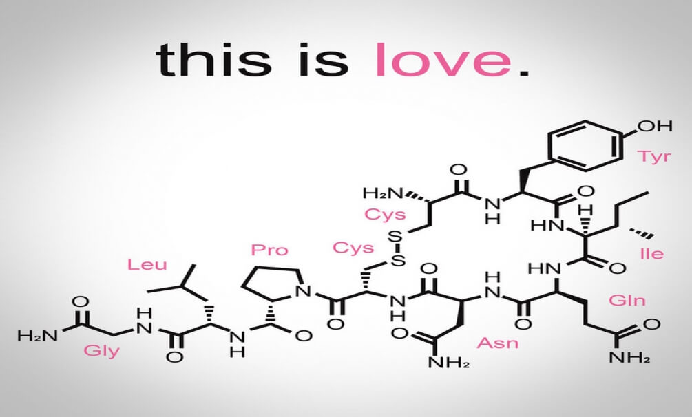 The Incredible Effects Of Oxytocin, Famously Known As The Cuddle Chemical