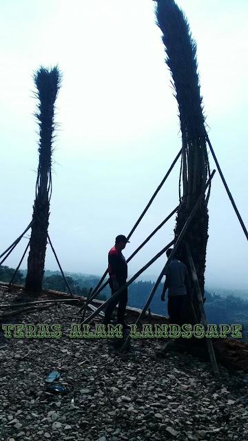 Jual pohon kurma 3m batang murah