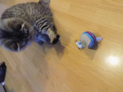 funny cat, hodor