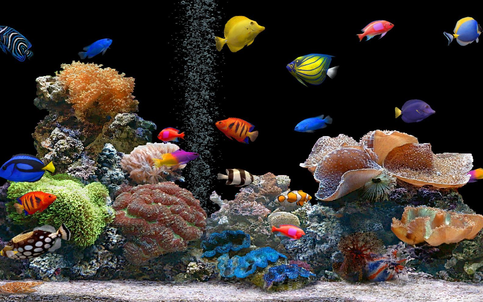 Ikan Laut Hias