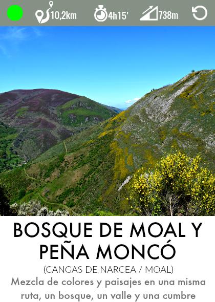 ruta bosque de moal cangas de narcea asturias