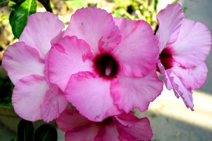 Ini Dia Cara Membuat Bunga dari Kertas Hvs Paling Cepat