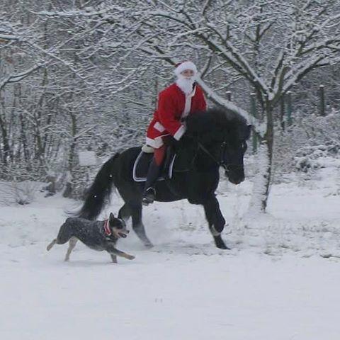 Frohe Weihnachten Pferd.Pferde Unsere Stolzen Freunde Frohe Weihnachten