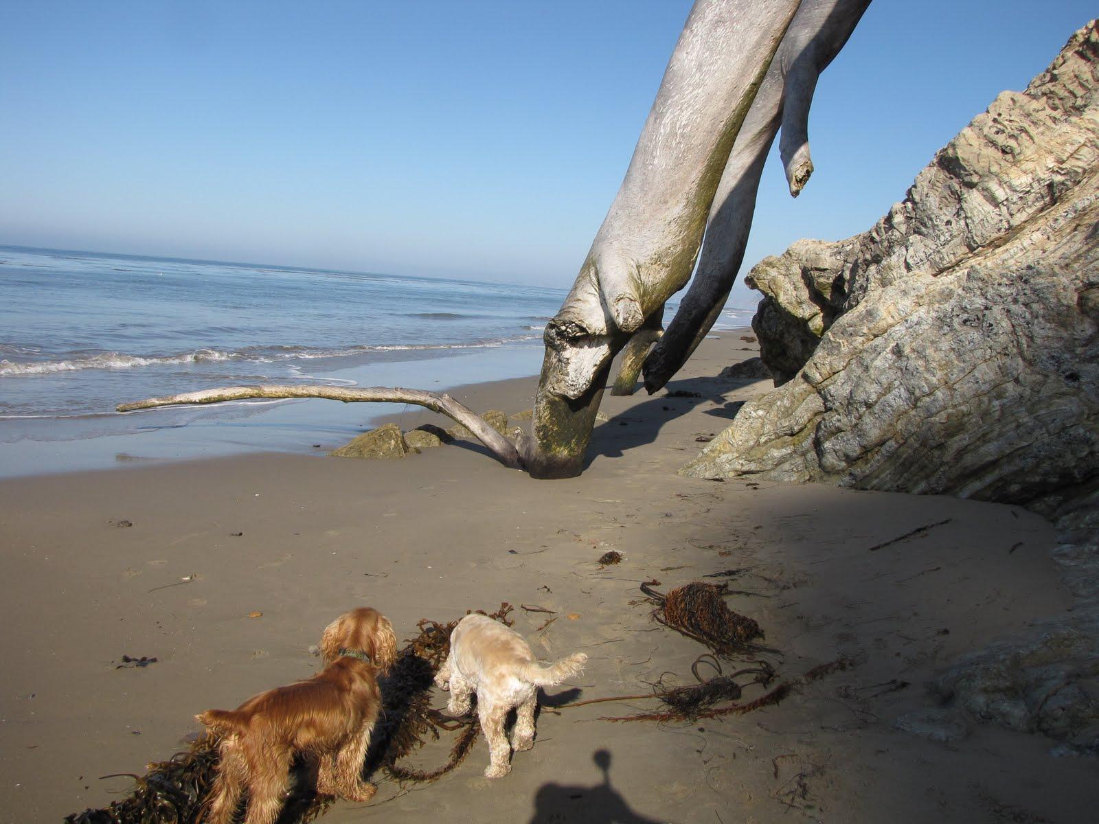 Santa Barbara Dog Friendly Job