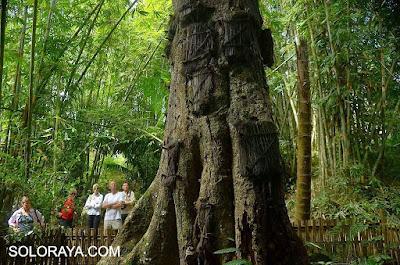 Kubur Bayi (Passiliran) Tanah Toraja