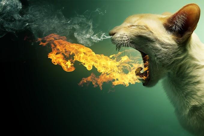 Flaming Cat free PSD templates