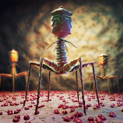 Современный нанит наноробот был сотворён ещё во времена древние, далёкие     Вирус сотворили очень давно О нём рассказано в древнем Манускрипте Войнич. Подробно показываю в фильме  Моя расшифровка рукописи Войнич ufospace  Вирус к 2020 году запрограммирован как эпидемия чумы, от которой нет лекарств. Но я полагаю, что лекарство есть и оно доступно каждому, лекарство бесплатно и очень эффективно.             Бактериофаг T4 (англ. Escherichia virus T4, ранее Enterobacteria phage T4) — один из самых изученных вирусов, бактериофаг, поражающий энтеробактерии, в том числе Escherichia coli. Имеет геномную ДНК порядка 169—170 тысяч пар нуклеотидов, упакованную в икосаэдрическую головку.           Вирион также имеет ствол, основание ствола и стволовые отростки — шесть длинных и шесть коротких.                  Бактериофаг T4 использует ДНК-полимеразу кольцевого типа; его скользящая манжетка является тримером, сходным с PCNA, но она не имеет гомологии ни с PCNA, ни с полимеразой β.           T4 является относительно крупным фагом, имеет диаметр около 90 нм и длину около 200 нм. Фаг T4 использует только литический цикл развития, но не лизогенный.            С фагом Т4 или подобными бактериофагами работали лауреаты Нобелевской премии Макс Дельбрюк, Сальвадор Лурия, Альфред Херши, Джеймс Уотсон и Френсис Крик, а также другие известные ученые — Майкл Россманн, Вадим Месянжинов, Фумио Арисака, Сеймур Бензер, Брюс Альбертс.                        В 2016 году, как и другие бактериофаги, был переименован в Escherichia virus T4.