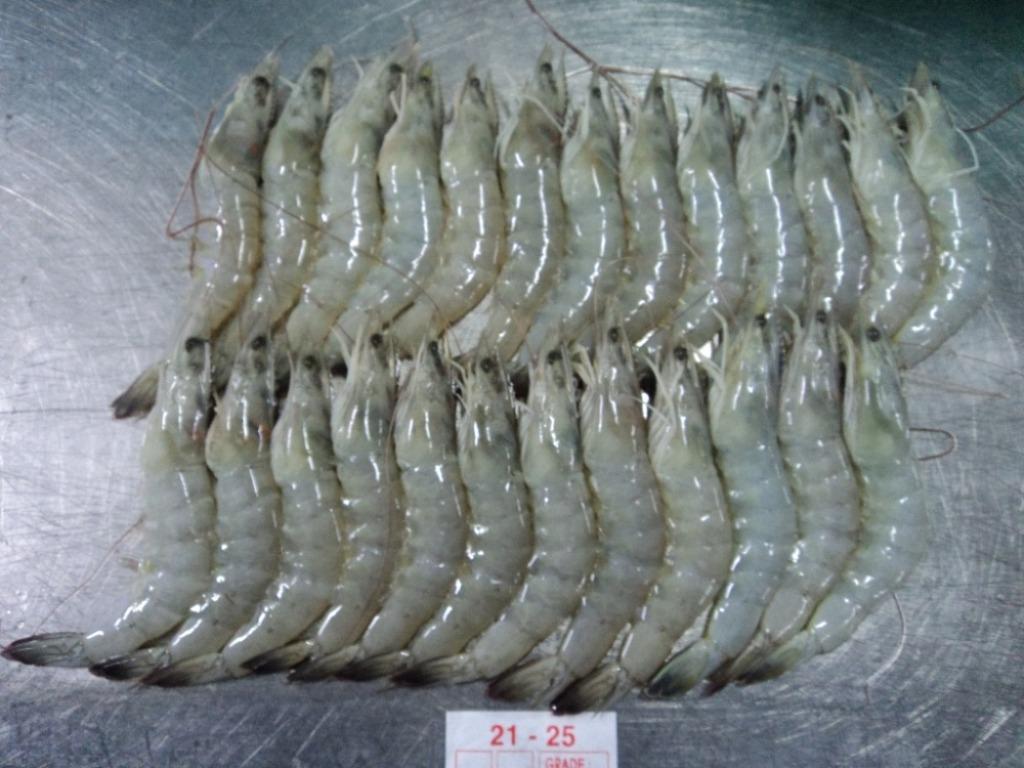 Complete Information about Vannamei Shrimp Classification