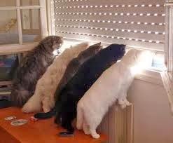 gatos espiando na janela