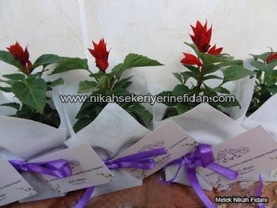 çiçek nikah fidanı İzmir Elif Başar - 1