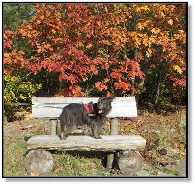 Lotte auf der Bank vor buntem Herbstlaub