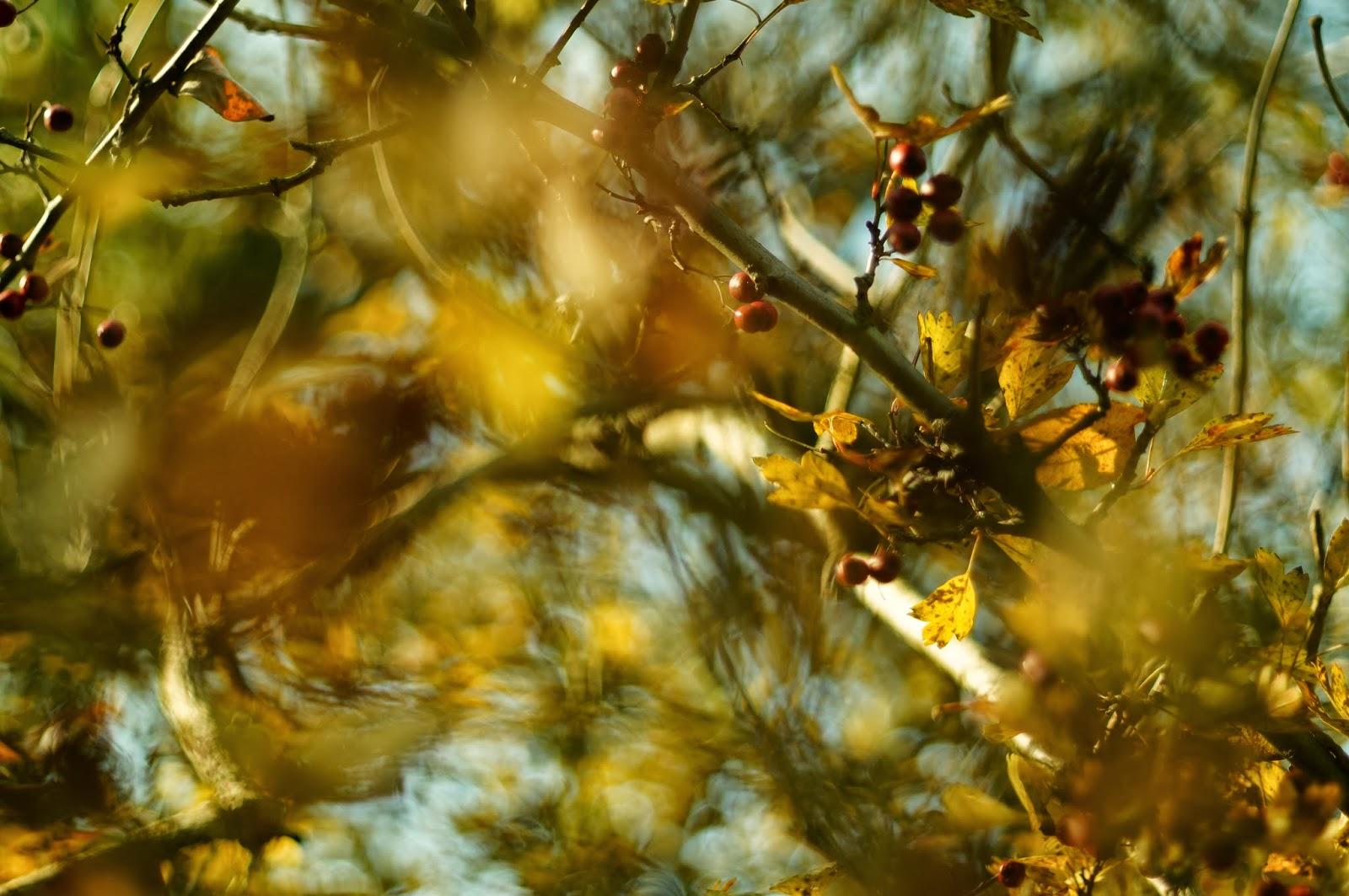 Carl Zeiss Jena Pancolar 50mm f/1.8 Zebra M42 sample