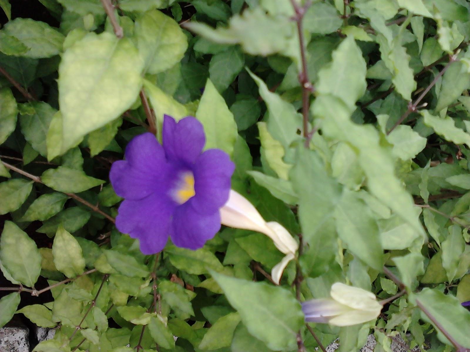 Garden Care Simplified 2 Easy Growing Purple Flowering Plants