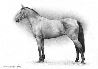 caballos-dibujos-profesionales-arte-a-lapiz