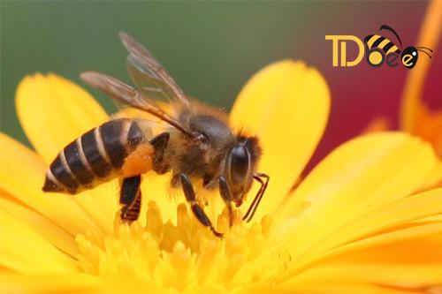 sữa ong chúa với bệnh đường ruột