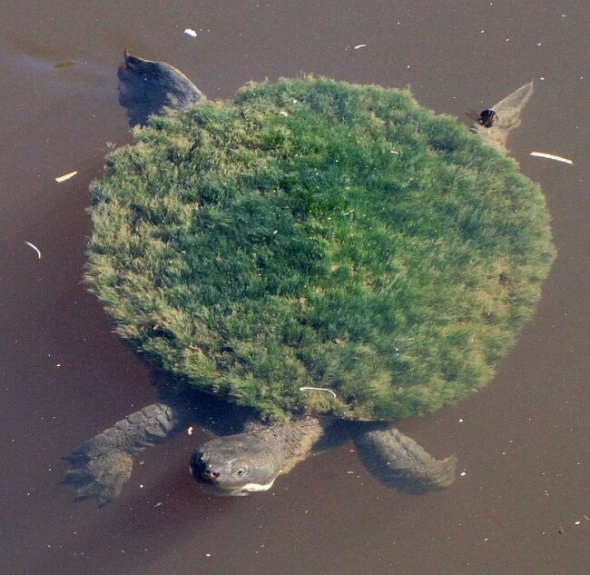 22 Breathtaking Images Of Things You've Never Seen Before - A turtle shell is covered with moss