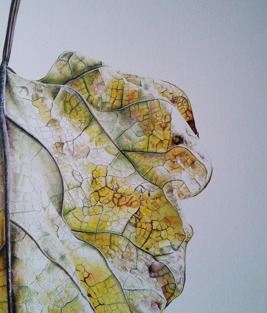 Botanical painting of a yellow leaf