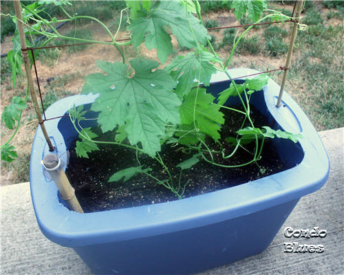 Condo Blues How To Make A Self Watering Planter From A Plastic