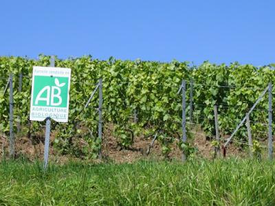 blog vins beaux-Vins vin bio en perte de vitesse en France
