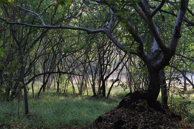 vetak tekdi hill pune forest green nature