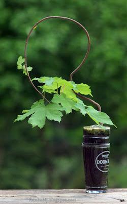 http://fotobabij.blogspot.com/2015/08/bonsai-w-szklance-2w4.html