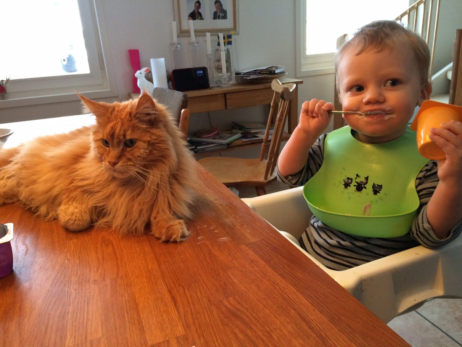 Zammy och sonen delar frukost 2