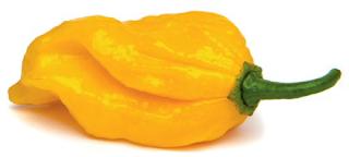 10 secrets sur les piments