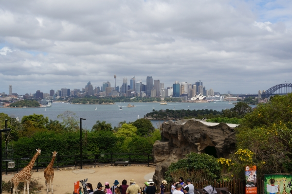 Sydney with Toddlers: skyline and harbour view from Taronga zoo with giraffes | Away from the blue blog