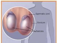6. Soal Latihan Sistem reproduksi-Biologi Kelas XI IPA SMA-MA
