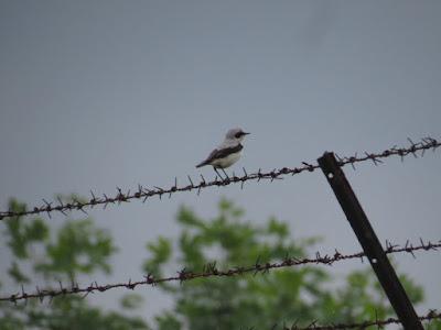 ציפור על תיל - מחנה זקסנהאוזן
