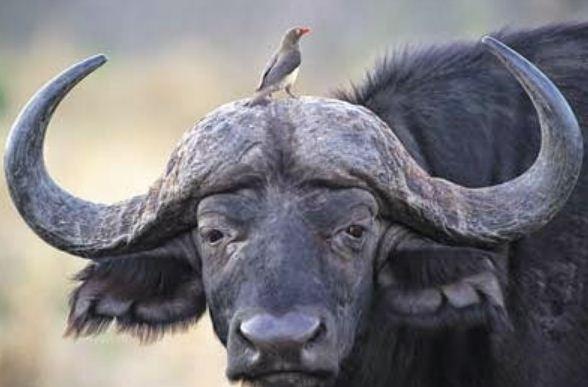 Jelaskan jenis interaksi antara spesies berikut, dan ...
