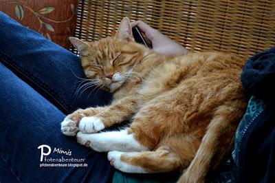 Katze Mimi als Seelentröster