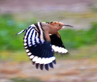 http://biomoncayo.blogspot.com.es/2011/03/indice-vertebrados-aves.html