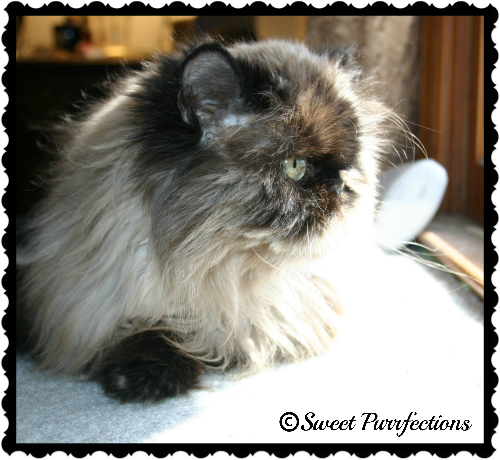 Remembering Sweet Praline - 5 years later