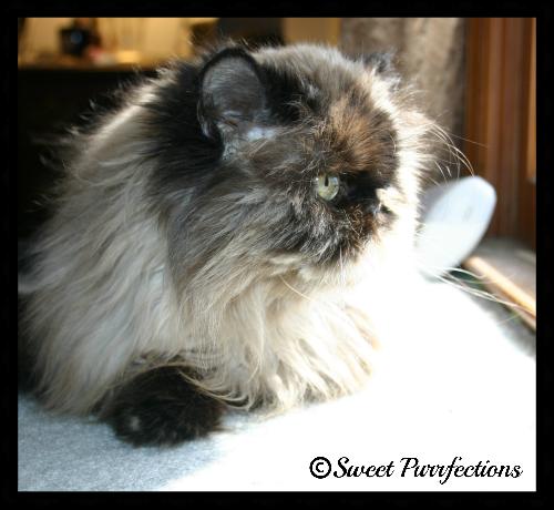 Remembering Sweet Praline - 5 years later