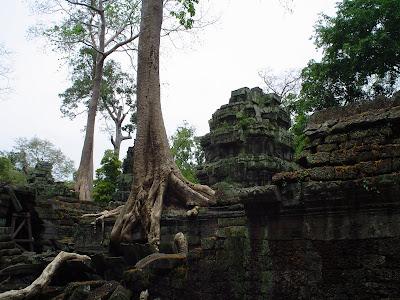 Árvore gigante nos Templos de Angkor - Camboja