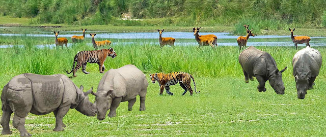 Chitwan National Park Wildlife Safari