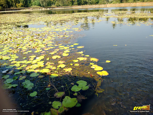 Water snake in Varanga lake